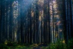 Dartmoor woods, Devon, England