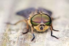 Macro Bug Eyes