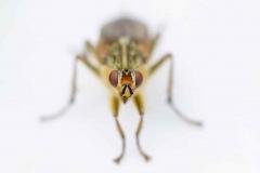 Fly Face Macro