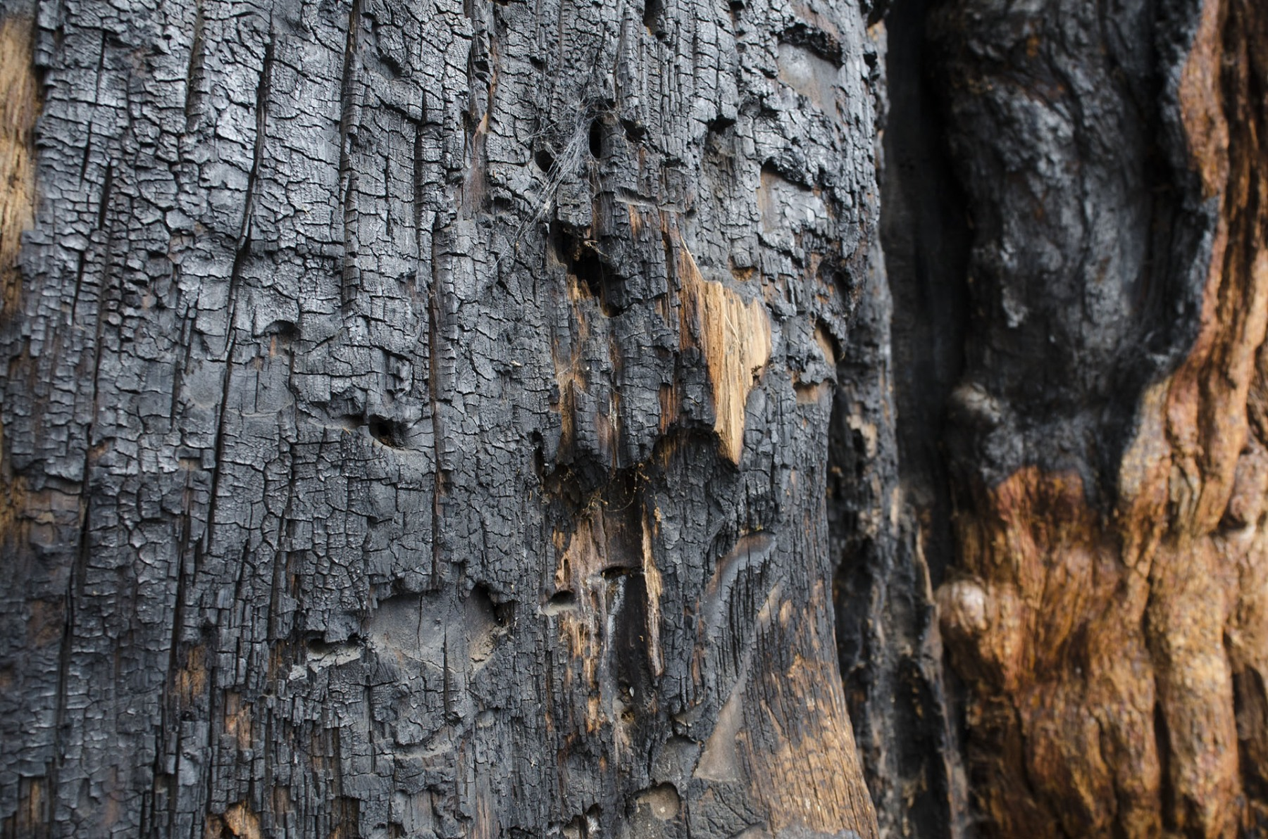 Burnt-redwood