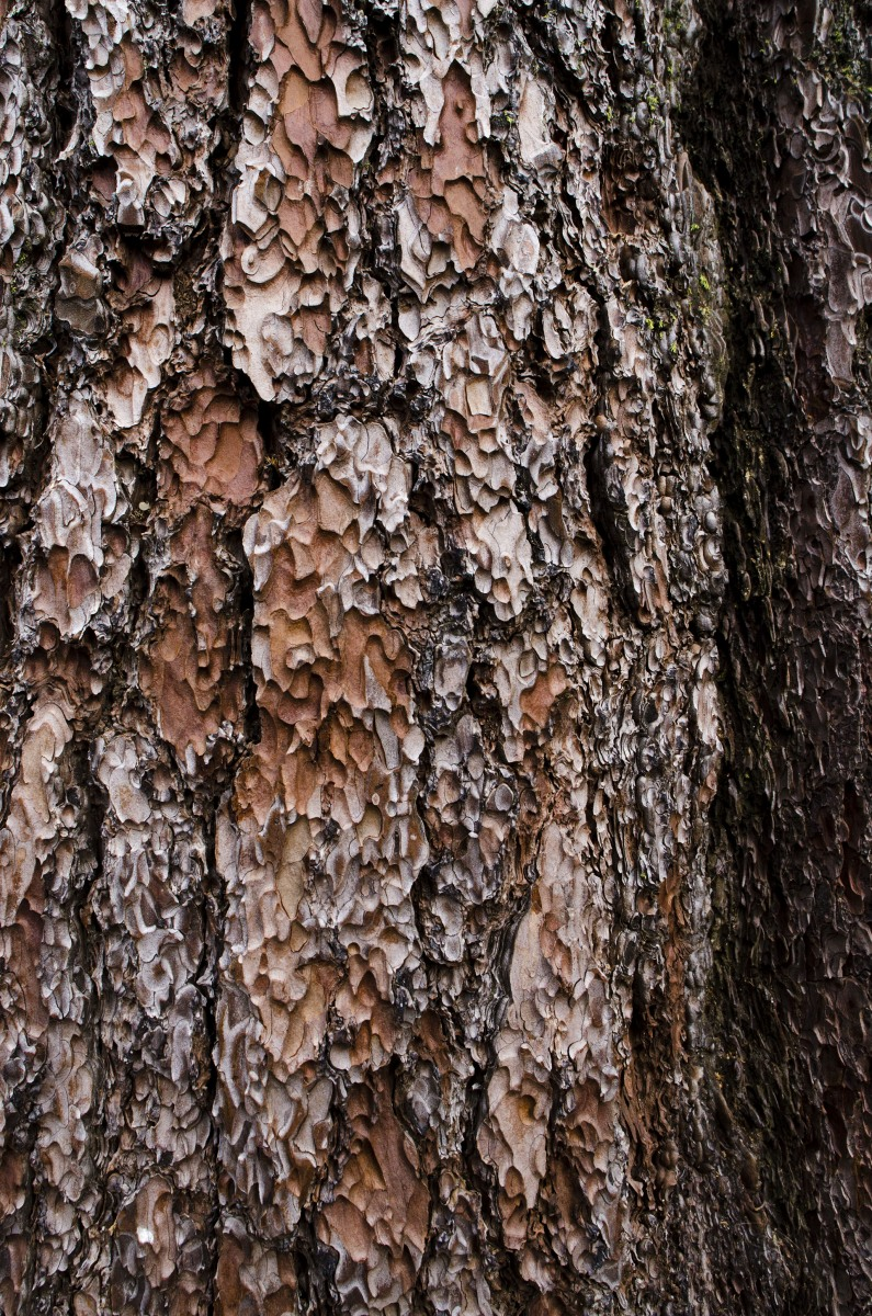 Redwood-Bark