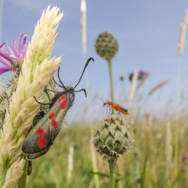Field of grasses with two insects in it