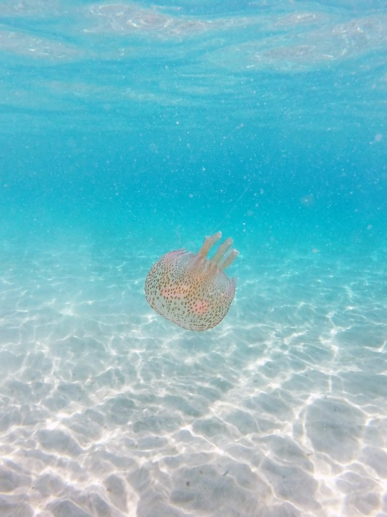 Ibiza Jellyfish