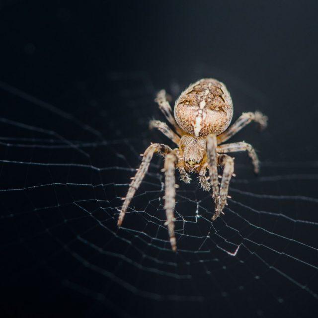 Hoe Spider